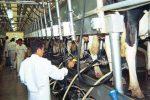 """Productores santafecinos aseguran que si el sector """"sigue cayendo, se va a terminar importando leche"""""""