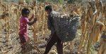 Los números del trabajo infantil