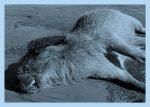 Ecocidio en el Delta: Un cementerio de animales carbonizados