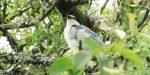 Entre Ríos suma una nueva especie de ave a sus montes