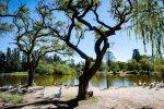 Este sábado habrá feria en el Parque Gazzano