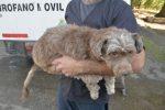 En el 2020 Salud Animal Paraná realizó 7.500 castraciones gratuitas de mascotas