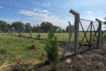 Puesta en valor el cementerio de los negros en Ingeniero Sajaroff