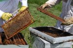 Agricultura lanzó la campaña federal de promoción de la miel
