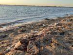 Invitan a participar de una jornada de limpieza del borde costero