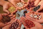 Primera feria de intercambio de semillas nativas y criollas en Paraná